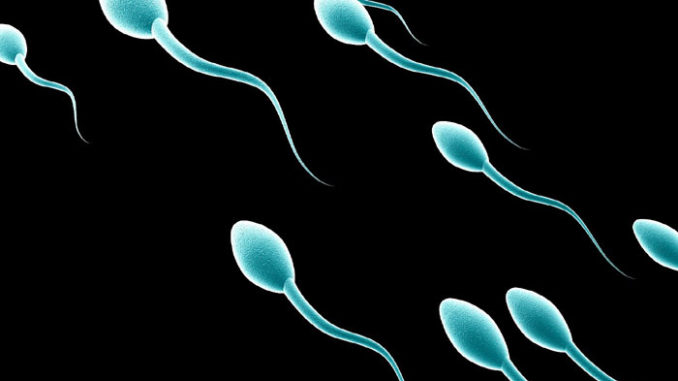 come aumentare lo sperma con i rimedi naturali